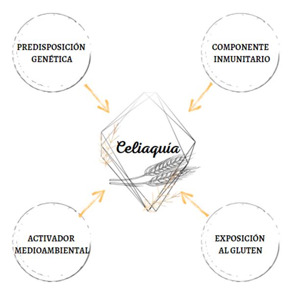 El desarrollo de la enfermedad celíaca depende de cuatro factores. Hay un componente inmunitario, una necesaria exposición al gluten, una base genética y se cree también, que un activador medioambiental.
