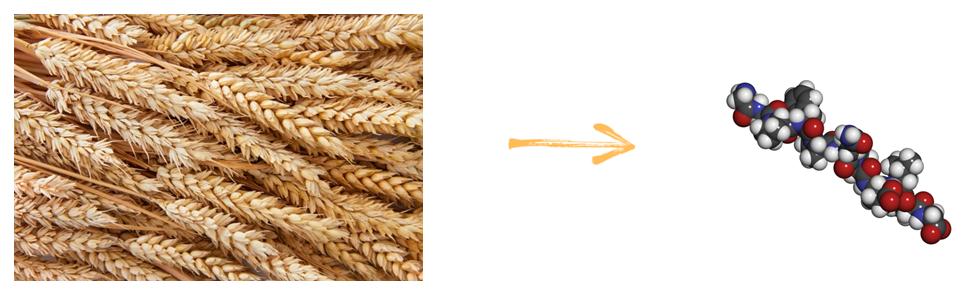 El gluten es una proteína presente en algunos cereales. Los más comunes son el trigo, la cebada, el centeno y los alimentos producidos a partir de ellos.